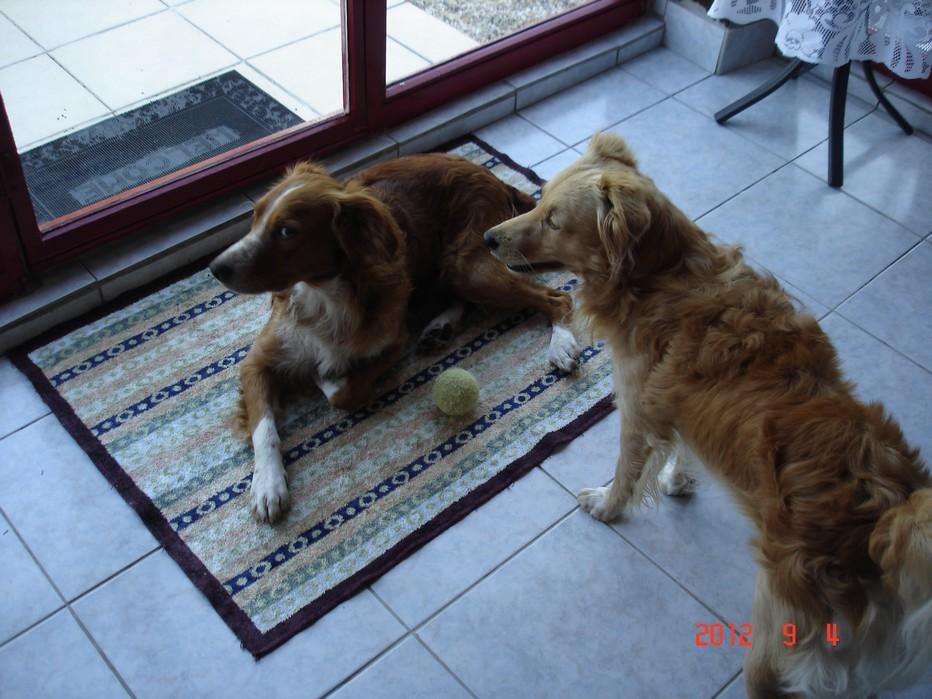Tintin et Snoopy