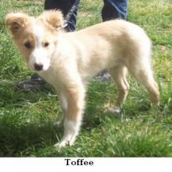 Toffy adopté en 2011