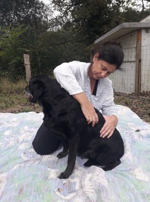Masseuse chien 1